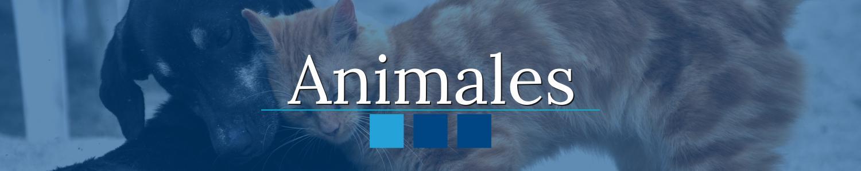 seguros animales hogar